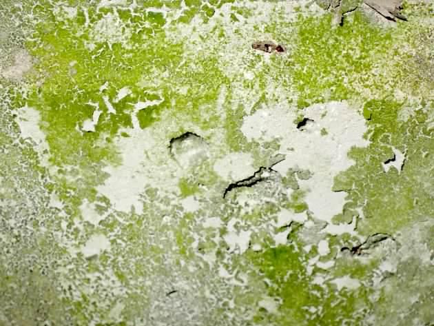 藻類(植物プランクトン)につい...